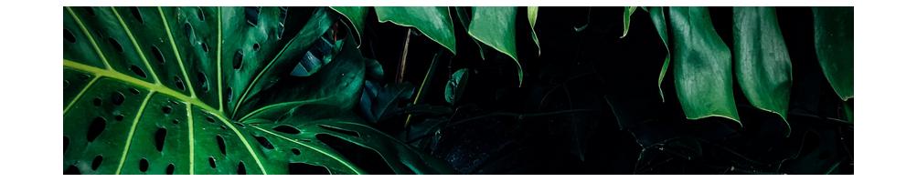 Extraction - végétale
